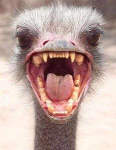 ostrich_head