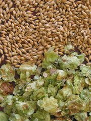hops-and-malt